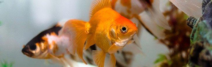 Fish close view